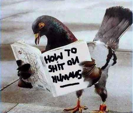Pigeon Reading dans Humour pigeon-reading