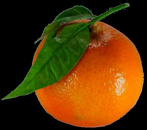 Histoire d' une clémentine dans Humour clementine